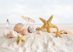 夏の結婚式『サマリッジ』!海がテーマのマリン感あふれるSummer Weddingにきゅん*のトップ画像