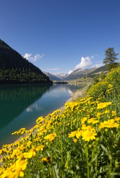 I colori del #Lago di #Livigno in estate! ** Livigno lake's colors in summer!