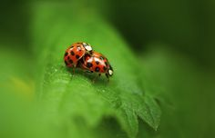 Love is all by Olivier Ferrari on 500px