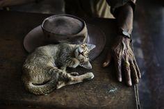 Still Life | Steve McCurry