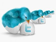 Hatch your #Twitter account! Getting Started On Twitter #socialmedia