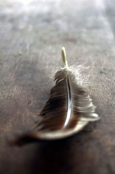 """❂ """"When you become comfortable with uncertainty, infinite possibilities open up in your life."""" ~ Eckhart Tolle / there might be magic in that feather! Foto Art, Wabi Sabi, Bird Feathers, Goose Feathers, Black Feathers, Belle Photo, Brown And Grey, Color Inspiration, Lightroom"""