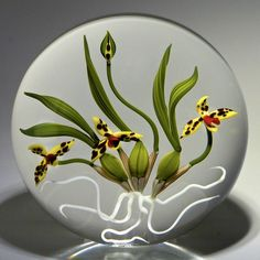 "Chris Buzzini ""Maxillaria Tenuifolia,"" or coconut orchid paperweight. A tropical composition, celebrating this hearty orchid with dark-spotted yellow petals, green leaves and root system on clear ground. The latin name ""maxilaria"" alludes to the column and lip inside the ringent flowers of some species which somewhat resemble the jaws of an insect. Signed/dated 1991. - #0037"
