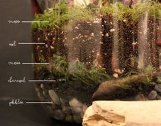 The layers of your jar garden