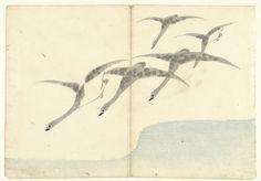 Vijf vliegende ganzen, Nakamura Hôchû, Izumiya Shojiro, 1826