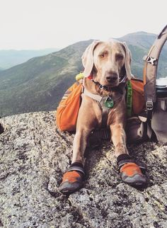 Who lives for adventure? #Adventure #Pets