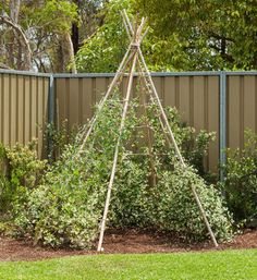 How to make a living teepee: grow the ultimate outdoor cubby for your littlies – they'll totally dig it!