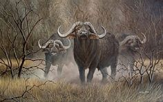 buffalo - Painting Art by Graham Jahme - Nature Art & Wildlife Art - African Wild Life, Land & Sea-scapes - Jahme Art African Animals, African Safari, Wild Animals, Animals And Pets, Tanzania National Parks, Buffalo Painting, African Buffalo, Hunting Art, Illustration Art