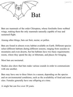 Bat, habitat, science, natural science, interactive, 1st grade, 2nd grade, worksheet, handout, printable, Earth, homeschool, independent study, stay at home mom, curriculum, lesson plan, teach, learn, activity, fun, adventure, explore, hike, walk, reader, reading