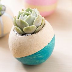 Learn how to make these cute succulent planters in just 5 minutes! They are so easy to make and will look gorgeous in your home!