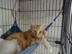 里親さんブログ待ちぼうけ…からのぉ~♥ - http://iyaiya.jp/cat/archives/73194