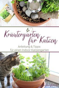 [Anzeige] DIY-Katzengarten für Wohnungskatzen gestalten Diy Upcycling, Urban Gardening, Crafty, Zero Waste, Pets, Interior Inspiration, Green, Jewelry Making, Summer Diy