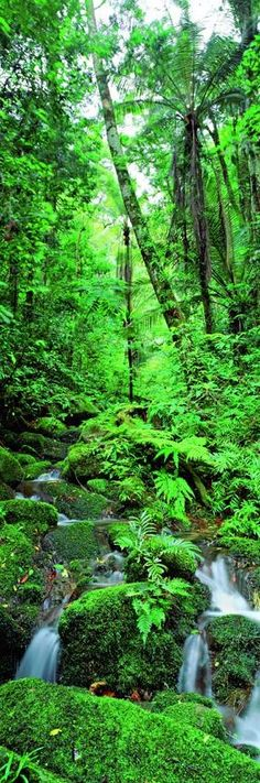 Tropical Rainforest.. I REALLY Want to go here!