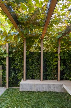 Port Melbourne - Ben Scott Garden Design   Timber and Steel Pergola, Boston Ivy, Concrete Bench, Mondo Grass