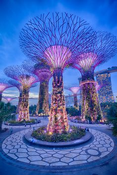 SuperTrees Grove, Singapur.