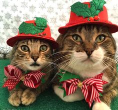 Morrison and Joey celebrating the Christmas season with red hats and red and white striped bow ties