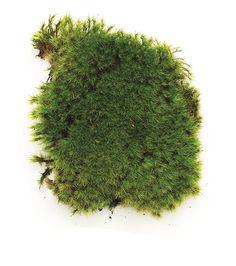 Moss type - Garden Design Calimesa, CA