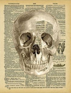 Vintage illustration of a human skull, on a page of an antique dictionary. $8.50