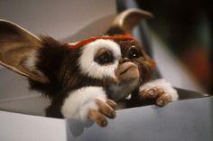 Gremlins Photo: Gizmo