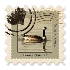 """Stamp of the Day #6 - """"Goose Natural"""" - Photographed by Luke Ottinger along the Delaware River in Penns Grove, NJ. — with Luke Ottinger.  Tags: Discover Salem County NJ"""