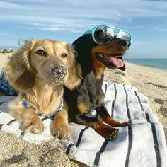 Crusoe The Celebrity Dachshund, Dresser, Wish You Are Here, Smile Face, South Beach, Dogs, Animals, Instagram, Comme