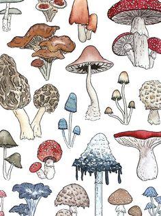Mushroom Drawing, Mushroom Art, Arte Sketchbook, Hippie Art, Aesthetic Art, Aesthetic Fashion, Art Sketches, Tattoo Sketches, Tattoo Drawings