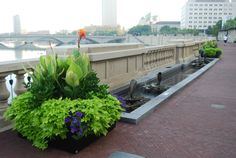 Bicentennial Park & Scioto Mile in Downtown Columbus, OH Bicentennial Park, Columbus Ohio, Landscape, Plants, Plant, Landscaping, Planting, Planets