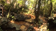 Национальный парк Кат-Ба, цикада.