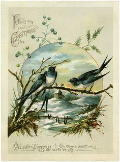 Antique Christmas Birds Image