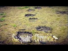 Sasquatch Chronicles SC EP: 122 Sasquatch at my window Part Two [Bigfoot...