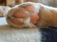 Keep Your Cat's Paws and Claws Healthy With These 5 Tips