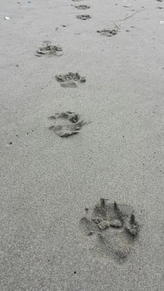 My paw print in sand