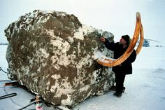 """""""The Jarkov Mammoth was airlifted from the Siberian permafrost inside a 23-tonne block of frozen earth - it had been buried for 20,000 years."""""""