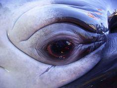 Whale eye