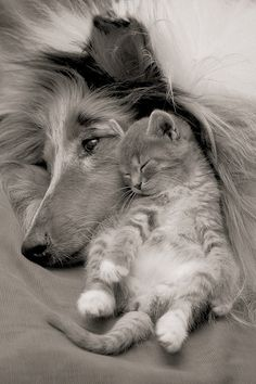 cat - dog - animal - photography - kitten - hond - fotografie - zwart en wit