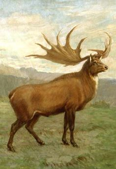 Megaloceros, known as the Irish elk