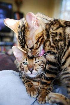 kittehs, amazing kittehs, uncredited