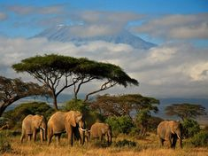 Elephants - National Geographic