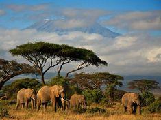A Kenyan Safari- my dream