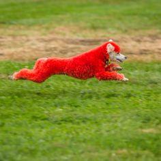 Spooky Pooch at full speed