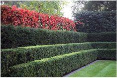 layered hedge | designed by Luciano Giubbilei