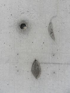 Leafs in cement wall / Tadao Ando Vitra Building