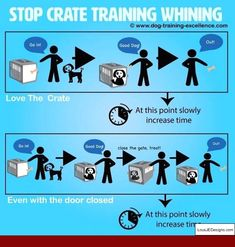 Cat Training Tips Stop Crate Training Whining - Cats are among the greatest pets a person can own. Unlike dogs, cats are incredibly independent and taking care of them is much easier. However, there are still many important things you need to be re Crate Training, Training Your Puppy, Dog Training Tips, Pitbull Training, Potty Training, Puppy Training Schedule, Training Quotes, Leash Training, Dog Minding