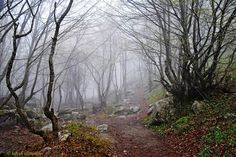 جنگلهای زیبای قره داغ - کلیبر