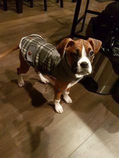 Roxy in her new coat!