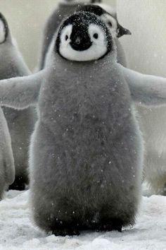 Adorable baby penguin.