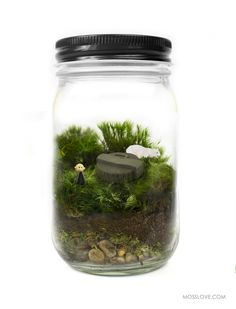 Lost Inspired Terrarium -- Moss Love