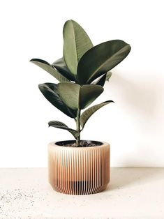 PRAHA – Indoor wood plant pot perfect for succulents or cactus. Minimalist and Scandinavian decor for your home. Available in 3 sizes Vegetal and Sustainable material. Small Succulent Plants, Green Plants, Planting Succulents, Planting Flowers, Ficus, Large Planters, Wood Planters, House Plants Decor, Plant Decor