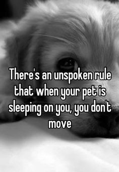 There's an unspoken rule that when your pet is sleeping on you, you don't move | Whisper.sh