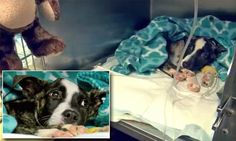 Puppy survives being buried alive as he is recovering from injuries